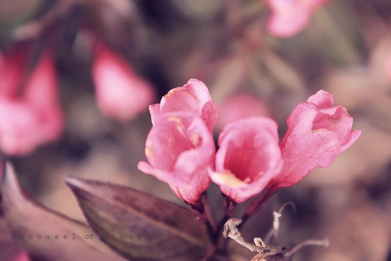 Florecitas Silvestres