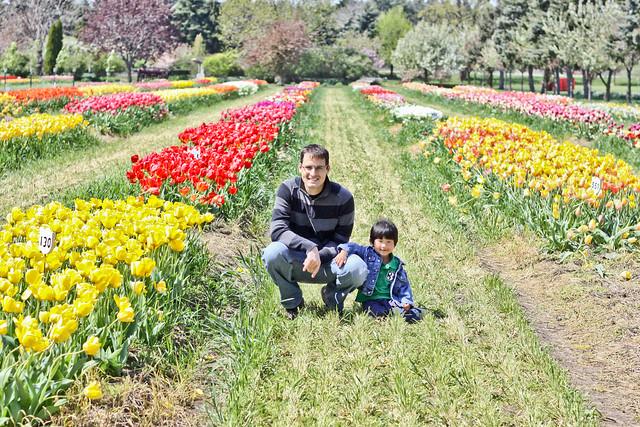 tulips_-3