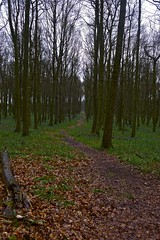 Wet Walk in Dockey Wood