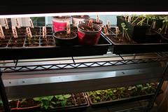 seedlings 003