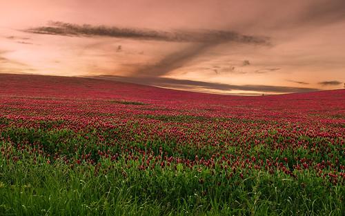 sunset crimson field oregon evening spring twilight cloudy may pasture clover laurel 2012 afterglow