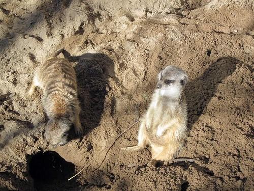 Riverbanks Zoo 2011