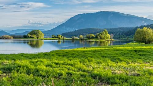 canada reflection green spring britishcolumbia may wetlands tamron f28 salmonarm d800 2014 2470