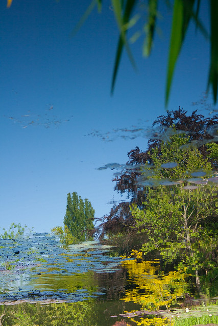 Reflections, Giverny