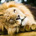 Big Cats Shoot-112.jpg