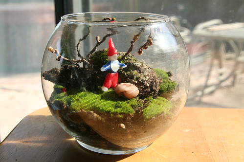 Finished Moss Terrarium