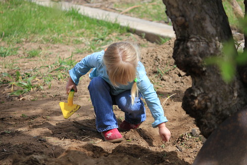 L digging in the dirt under the apple tree.