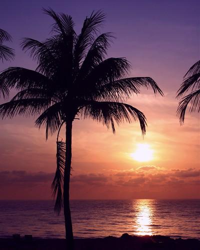 seascape beach nature beauty silhouette sunrise interesting sand colorful unitedstates florida shoreline explore palmtree watersedge naturalbeauty atlanticocean cloudscape 97 eastcoast southflorida palmfronds browardcounty naturesbeauty sunstream explored number97 deadpalmfrond deerfieldbeachflorida deadfrond bestposition50~41012