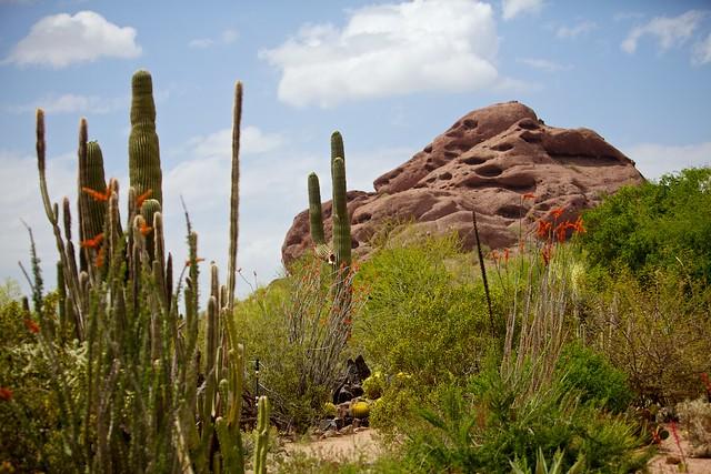 desert botanical garden flickr photo