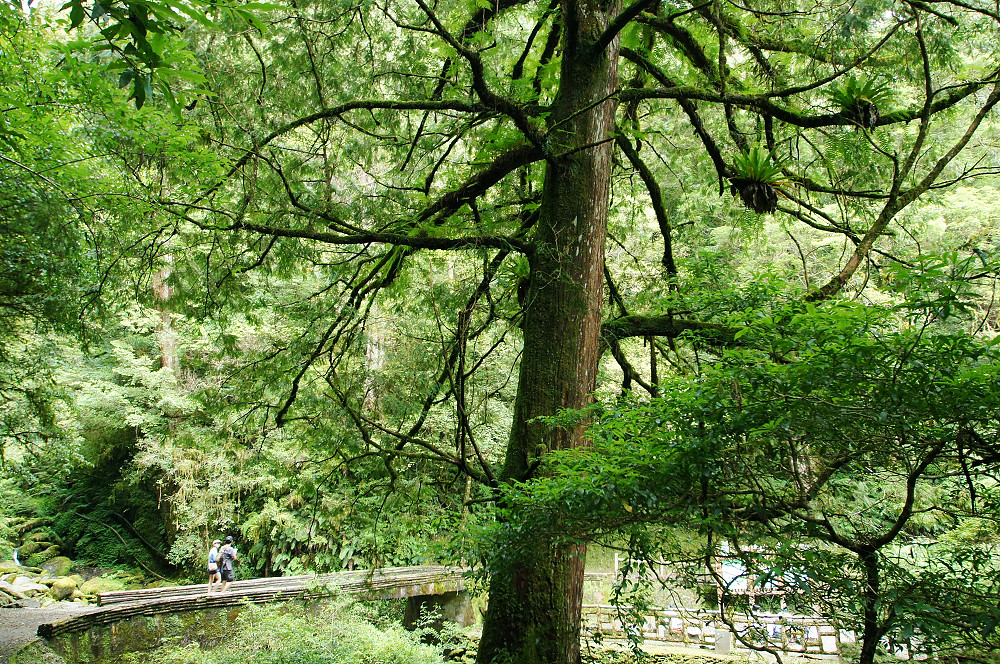 巨木群,與往拉拉山的路上-085