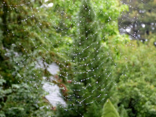 Raindrops on spider web