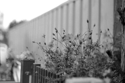 2013 0926 Leica3f Summarit50 Arista400Pr D76 029
