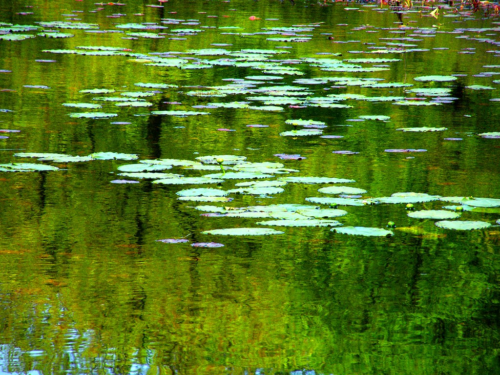 Monet Green Reflection