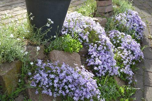 Steingarten im Mai