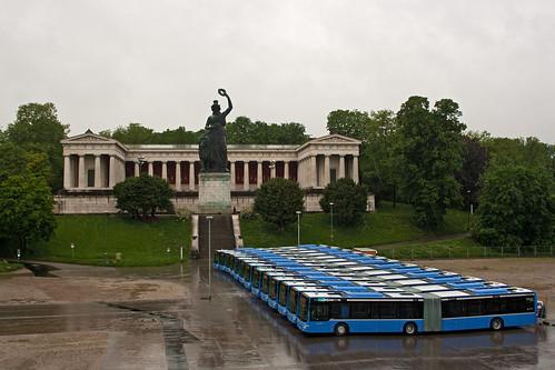 Die 13 neuen MAN-Gelenkbusse vor der Bavaria