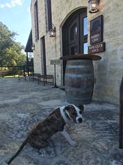 Fredericksburg #wine #Texas