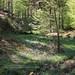 Schurwald, Hohengehren, forest clearing by blauepics