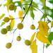 autumn balls by Rodrigo Uriartt