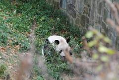 Papa Tian in his yard