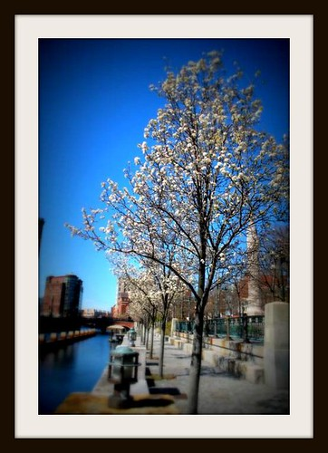 Trees in bloom by leith70