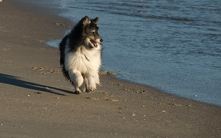 pippen on beach-cape may-32