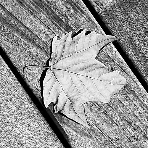 hojasecaf