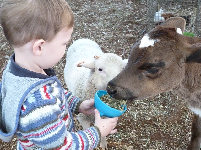 Feeding the animals