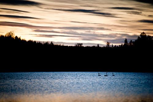 nature finland landscape spring sony sigma tele maisema luonto 70200mm kevät keskisuomi a900 sigma70200mm sigma70200mmf28iiapoexdgmacro