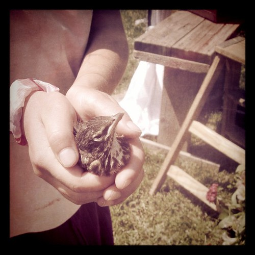 Lots of baby birds being saved this weekend. First Matt freed one from our window well and then there was this one at Na-Da Farm.