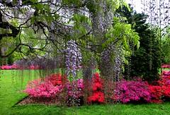 Brooklyn Botanic Garden NYC