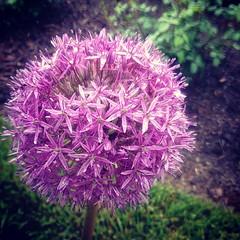 #flowers #biltmore