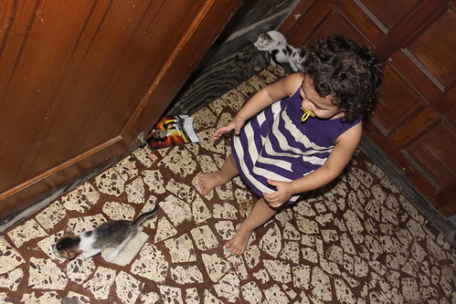 Zinnia Fatima And The Kittens by firoze shakir photographerno1
