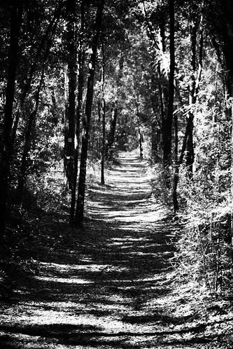 trees river rainbow shadows florida hiking path perspective trail hikingtrail rainbowriver dunnellon rainbowsprings morningsunlight seminolefalls yellowtrail rainbowspringsstatepark headsprings