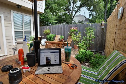 Houston Summer Morning Yard- 6/8/2013