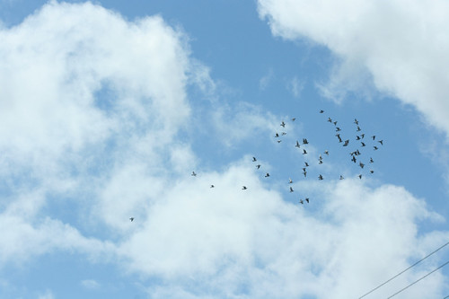 Flock of Birds Against the Sky