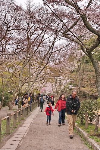 【写真】2013 桜 : 哲学の道/2018-12-24/IMGP9189