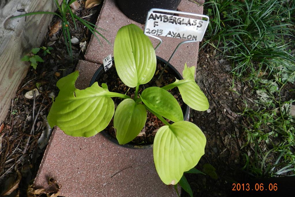 Garden13Jun0229