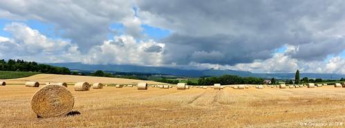 panorama ciel nuages paysages blés moissons echandens fabuleuse
