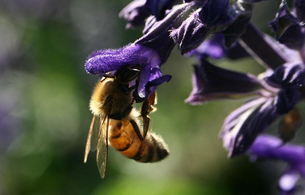 Bee hood