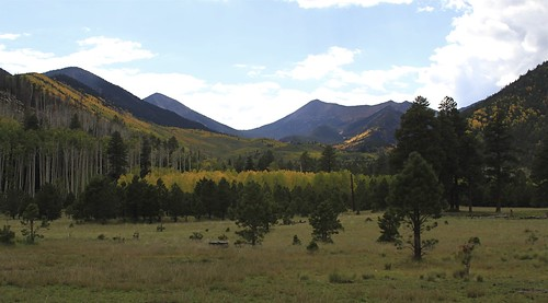 Lockett Meadow by Coconino National Forest