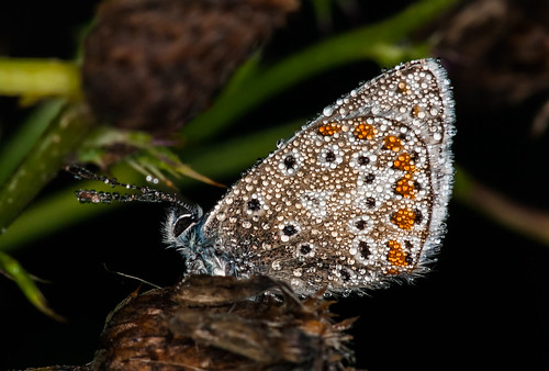 It was very Early Morning, A butterfly was under cover by Dew Drop