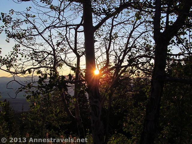 Sunrise through the Aspens on Mount Elbert