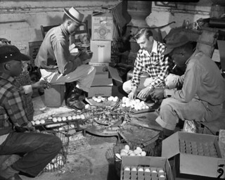 Workers sizing eggs in Tallahassee, Florida