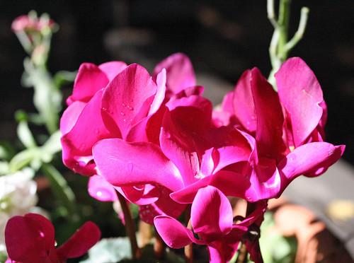 post3.flowerdrops
