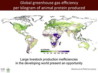 Global GHG efficiency per kg of animal protein produced
