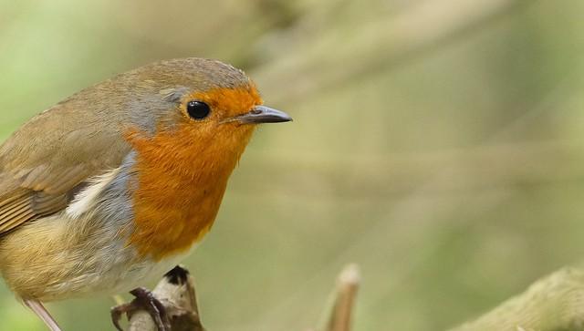 poze animale imagini frumoase animale 2015 fotografii superbe cu animale din diferite zone ale lumii foto Flickr animale postare noua bloguri cu animale natura imagini noi 2015 poze cu animale Robin