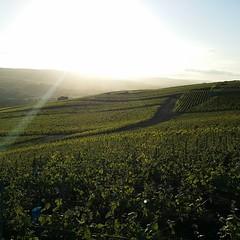 Retour des bonnes habitudes #MarneValley #sunshine #Champagne #Tarlant #igersreims