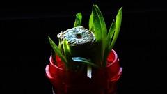 A little romaine lettuce anyone?