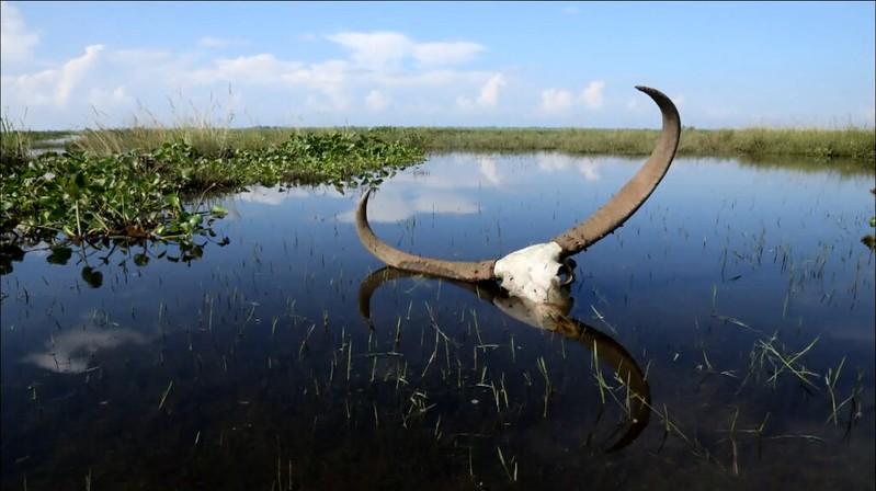 雨季來臨時,虛弱、受傷的動物會因遷徙而死亡。(動物星球頻道提供)