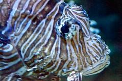 Ripley's Aquarium 84